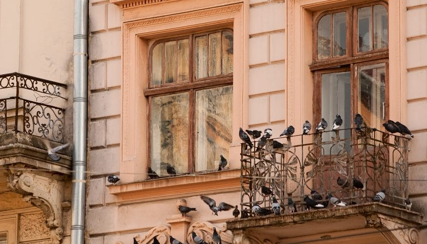 Tauben vertreiben – 7 Tipps