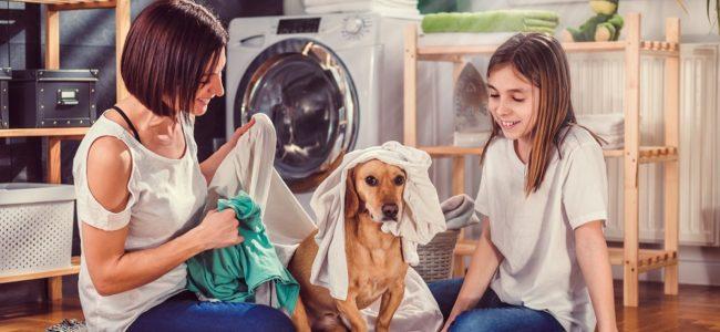 Tierhaare in der Waschmaschine: Tipps zum Entfernen und Vorbeugen