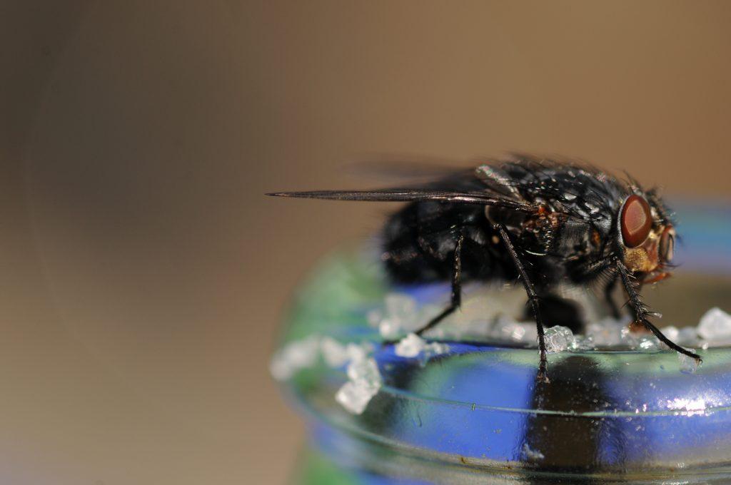6 tipps gegen fliegen. Black Bedroom Furniture Sets. Home Design Ideas