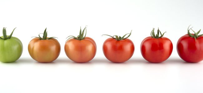 Grüne Tomaten: Wann Sie giftig sind und welche Sorten man essen kann