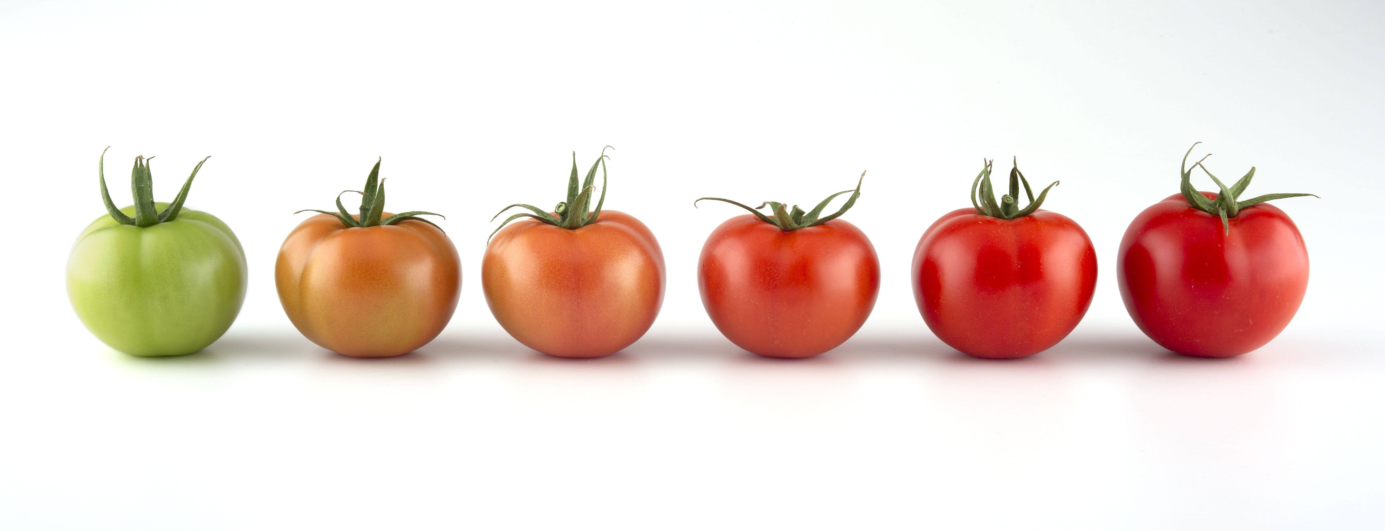 Super Grüne Tomaten: Giftig oder essbar? Darauf sollten Sie unbedingt achten #AB_97