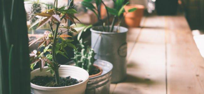 Pflanzen im Urlaub: Tipps zur Bewässerung von Zimmerpflanzen sowie Garten und Balkon