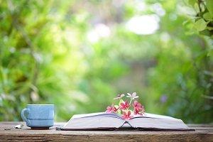 Buch mit Pflanze und Tasse.
