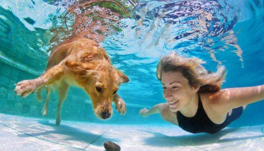 Urlaub mit Hund – Tipps & Tricks für unvergessliche Tage!