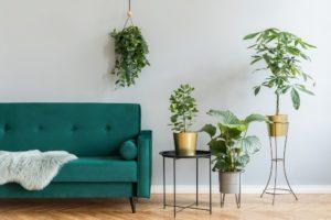Verschiedene Zimmerpflanzen vor grüner Couch