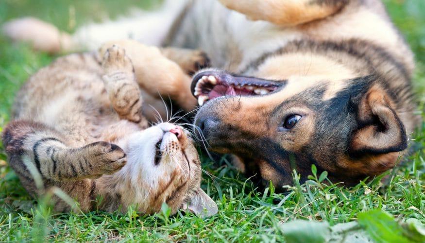 Vertragen sich Hunde und Katzen nicht?