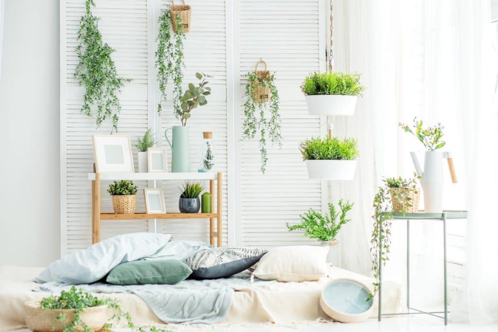 Luftreinigende Zimmerpflanzen: Pflanzen zum Raumklima verbessern