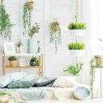 viele pflanzen im schlafzimmer