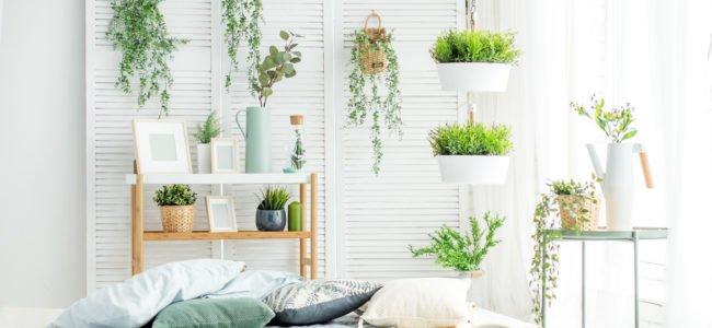 Luftreinigende Zimmerpflanzen: Das Raumklima mit Pflanzen verbessern