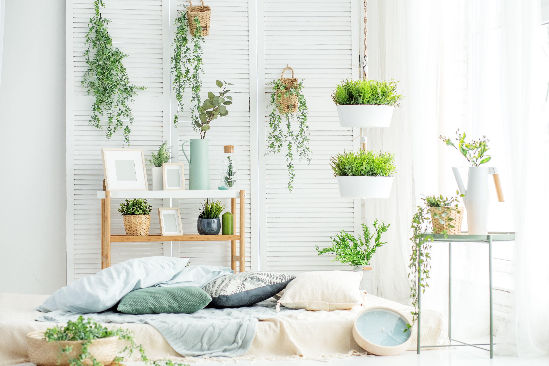 Pflanzen Fürs Schlafzimmer Luftfeuchtigkeit