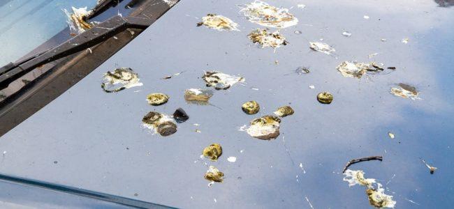 Vogelkot entfernen: Hausmittel gegen eingetrocknete Flecken an Hauswand & Auto oder auf der Kleidung