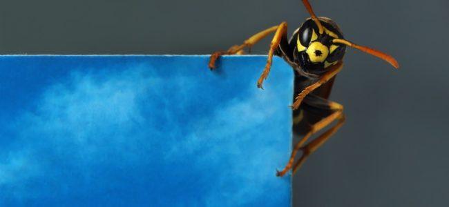 Hausmittel gegen Insektenstiche: Die besten Hausmittel und Maßnahmen zum Vorbeugen im Überblick