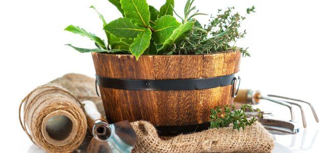 Winterharte Kübelpflanzen: Pflegeleichte, immergrüne Pflanzen für Balkon und Garten
