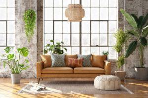 pflanzen in einem wohnraum